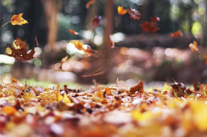 【9月】秋の訪れを感じて金運を先取る、開運的過ごし方